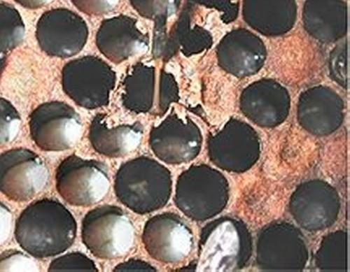 Pszczela kwarantanna