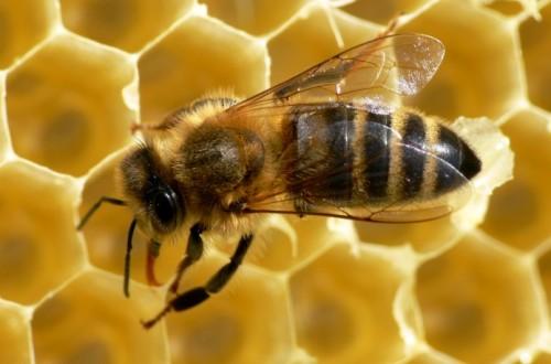 Ochrona roślin bezpieczna dla pszczół