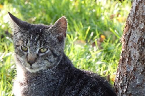 Młode kotki szukają domu!!!