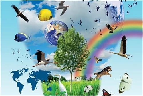 """""""Ziemia – to nasze wspólne dobro – szanujmy ją nie tylko od święta"""""""