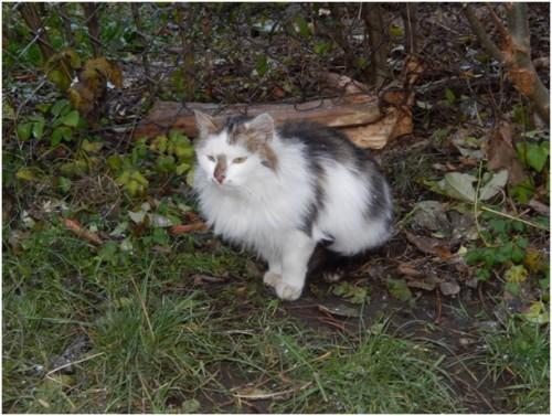 Kot szuka domu