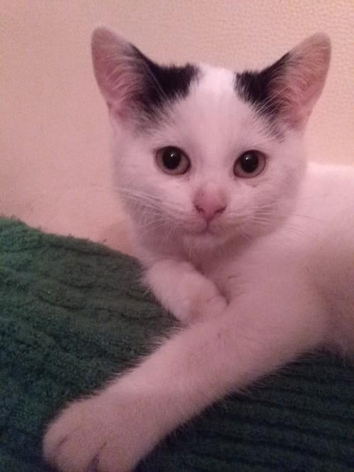 Śliczna mała koteczka szuka domu!!!