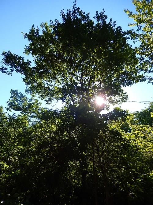 Wycinka drzew w okresie lęgowym
