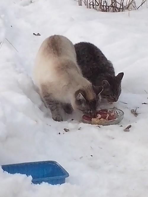 Szukamy domu dla 2 koteczek!