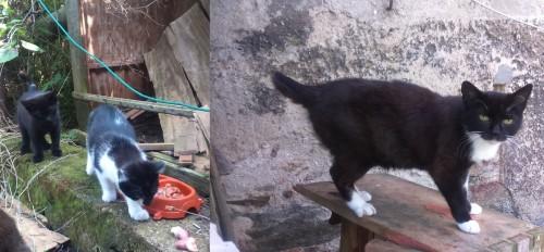 Porzucone kotki szukają domu!